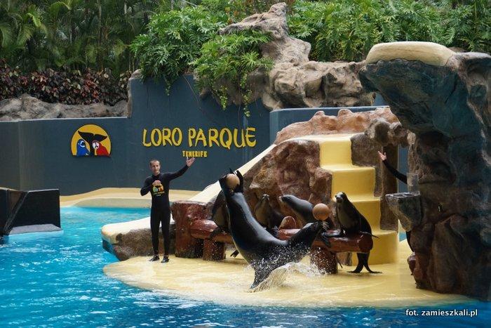 Loro Park Teneryfa