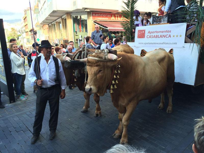 Zdjęcie pokazujące centrum w Puerto De la Cruz w Dzień Wysp Kanaryjskich - byk na obrazku